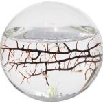 EcoSphere-Closed-Aquatic-Ecosystem-Small-Sphere-0