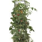 Hydrofarm-GCTB-Tomato-Barrel-with-4-Foot-Tower-0