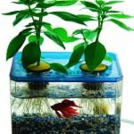 JrPonics-FishGarden-BubbleGarden-AquaponicsHydroponics-Gardening-Kit-for-Kids-Educational-Aquarium-Habitat-Grow-Plants-with-Fish-0